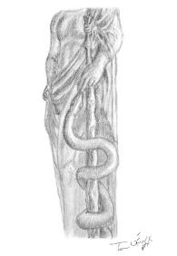 baton-asclepios-esculape-serpent
